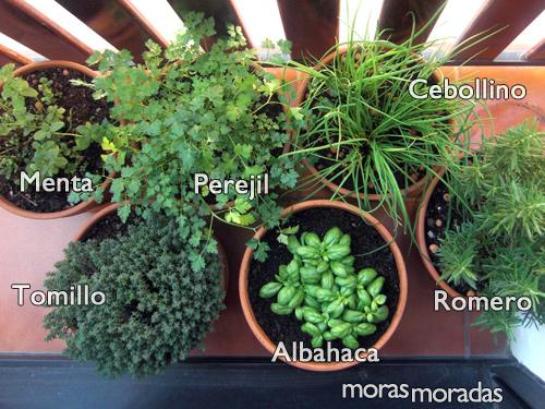 hierbas aromáticas | moras moradas